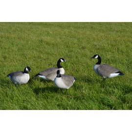 Canada goose decoys fully flocked upright